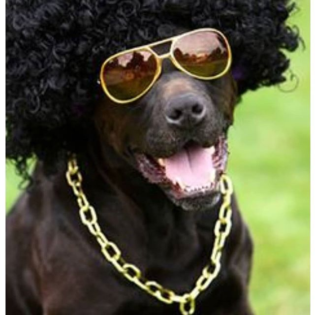 Join us at Dawg Paradise, 863 W Main Street, Westville, October 27th  11am to 2pm. Show us your creative costume for your pet.  We will have baked goods available to purchase for you and your pet.  Adult beverages will be served.  Get your pet's photo taken for a $10 donation. We can't wait to see all the costumes!!