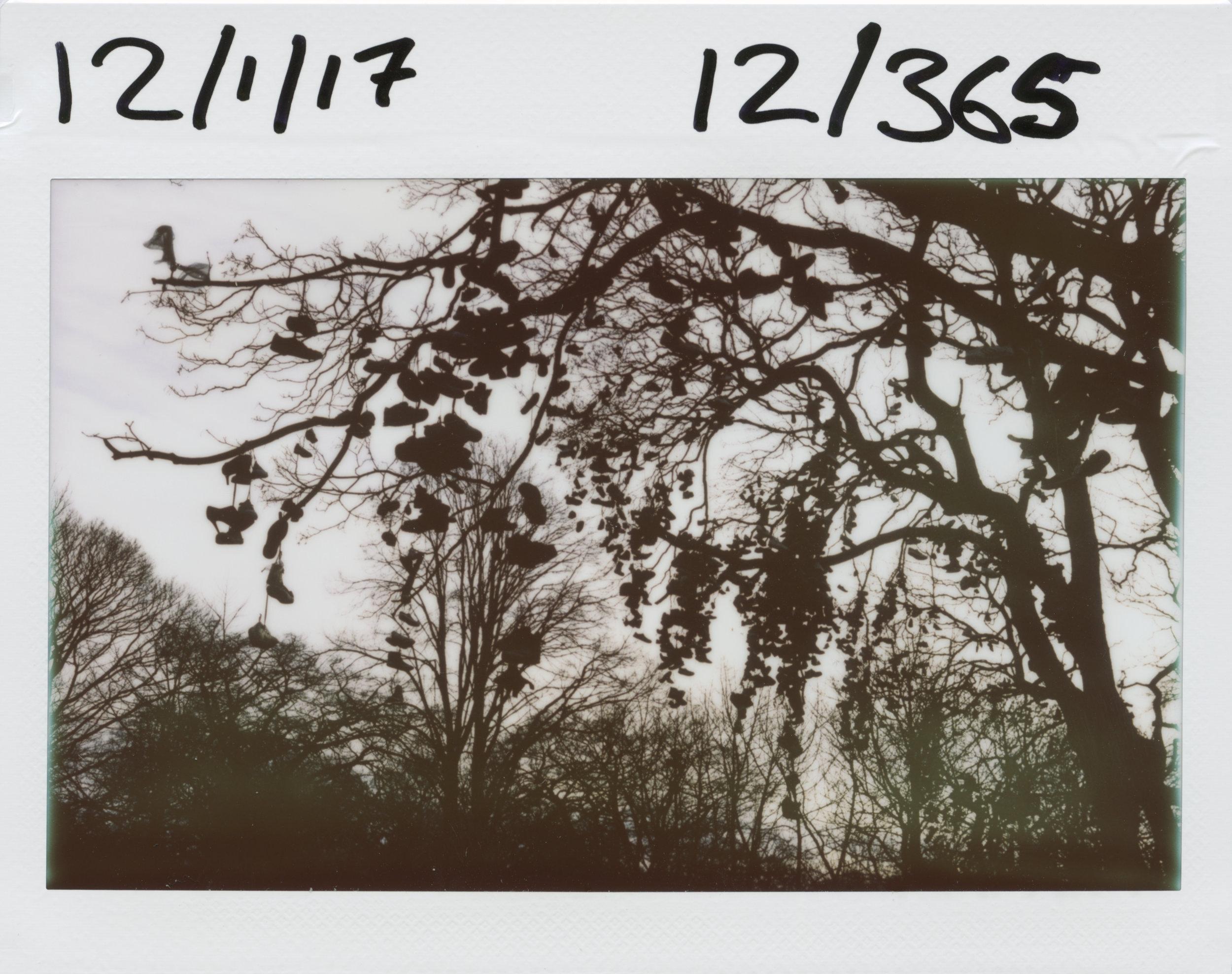 12.1.2017.jpg