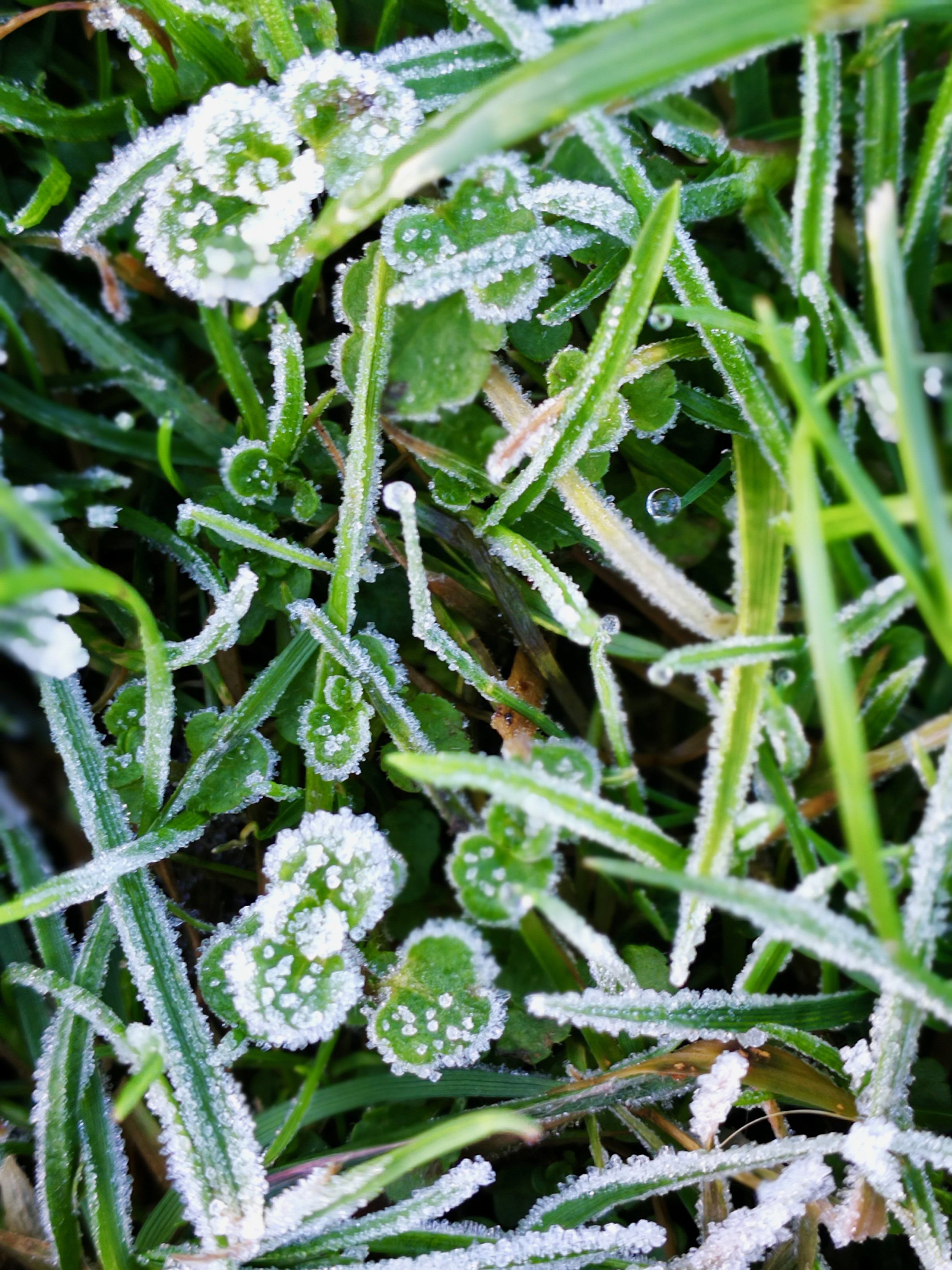 05-First-Frost-of-the-Season.jpg