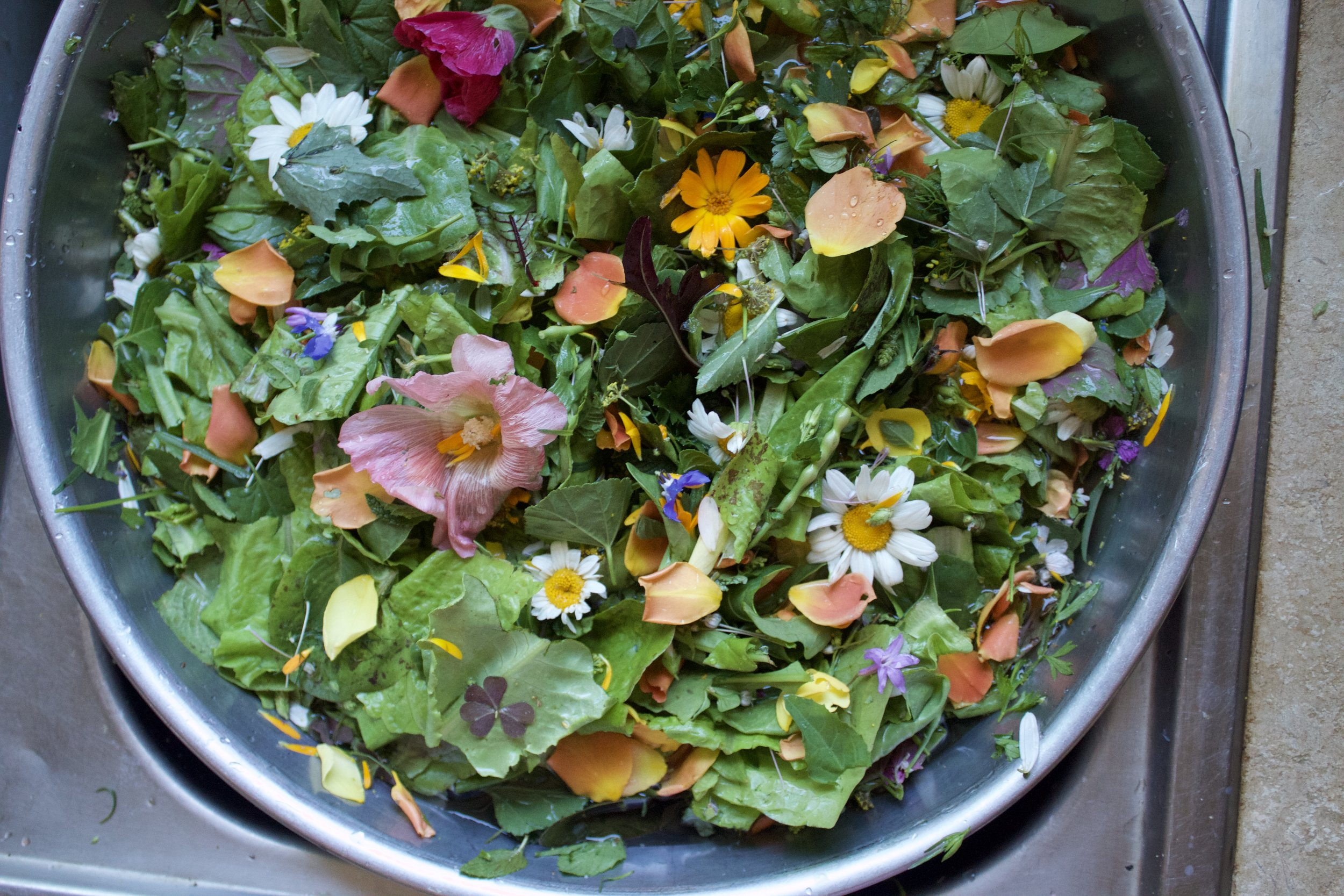 Floodgate Farm On Heart Mountain Salad Mix