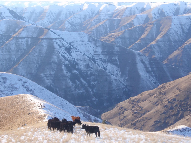mountain-beef-grass-fed-beef-winter.jpg