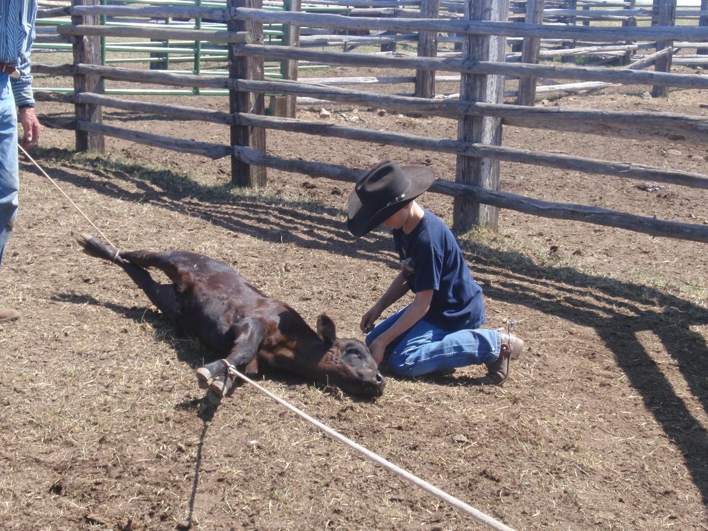 grass-fed-beef-familyP8050411.jpg