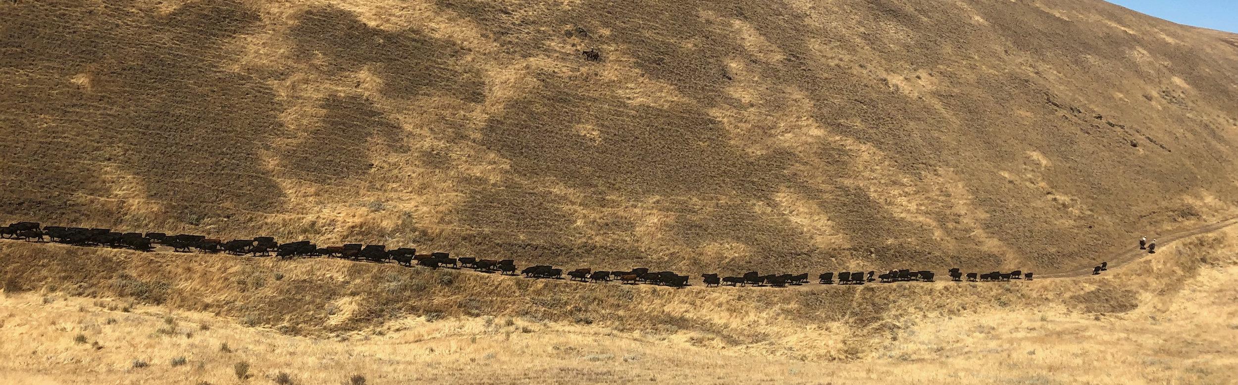 IMG_0640-long trail-cropped.jpg
