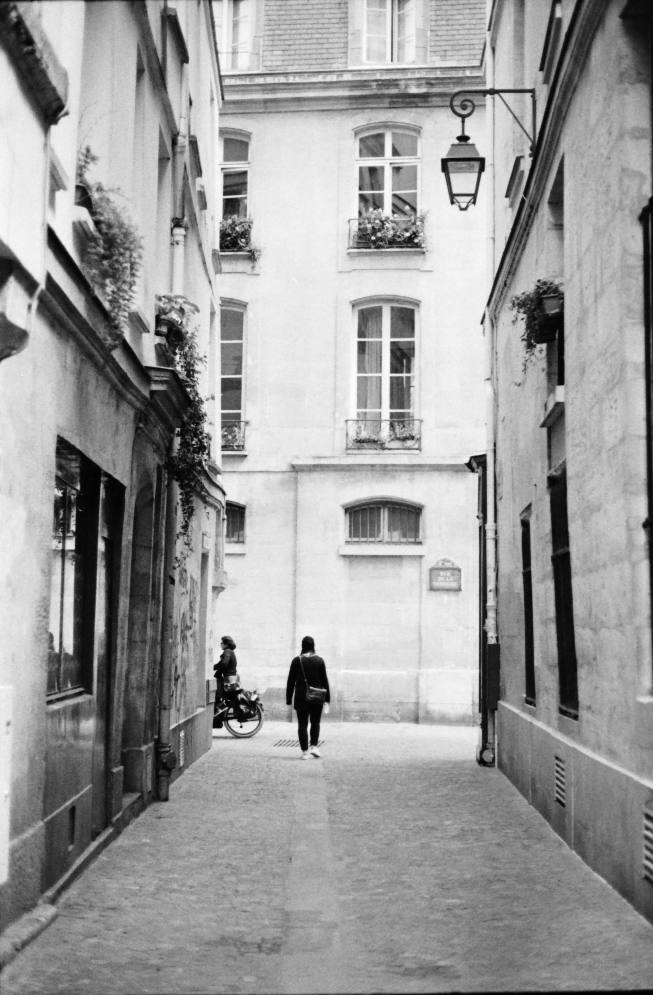 rue, rue