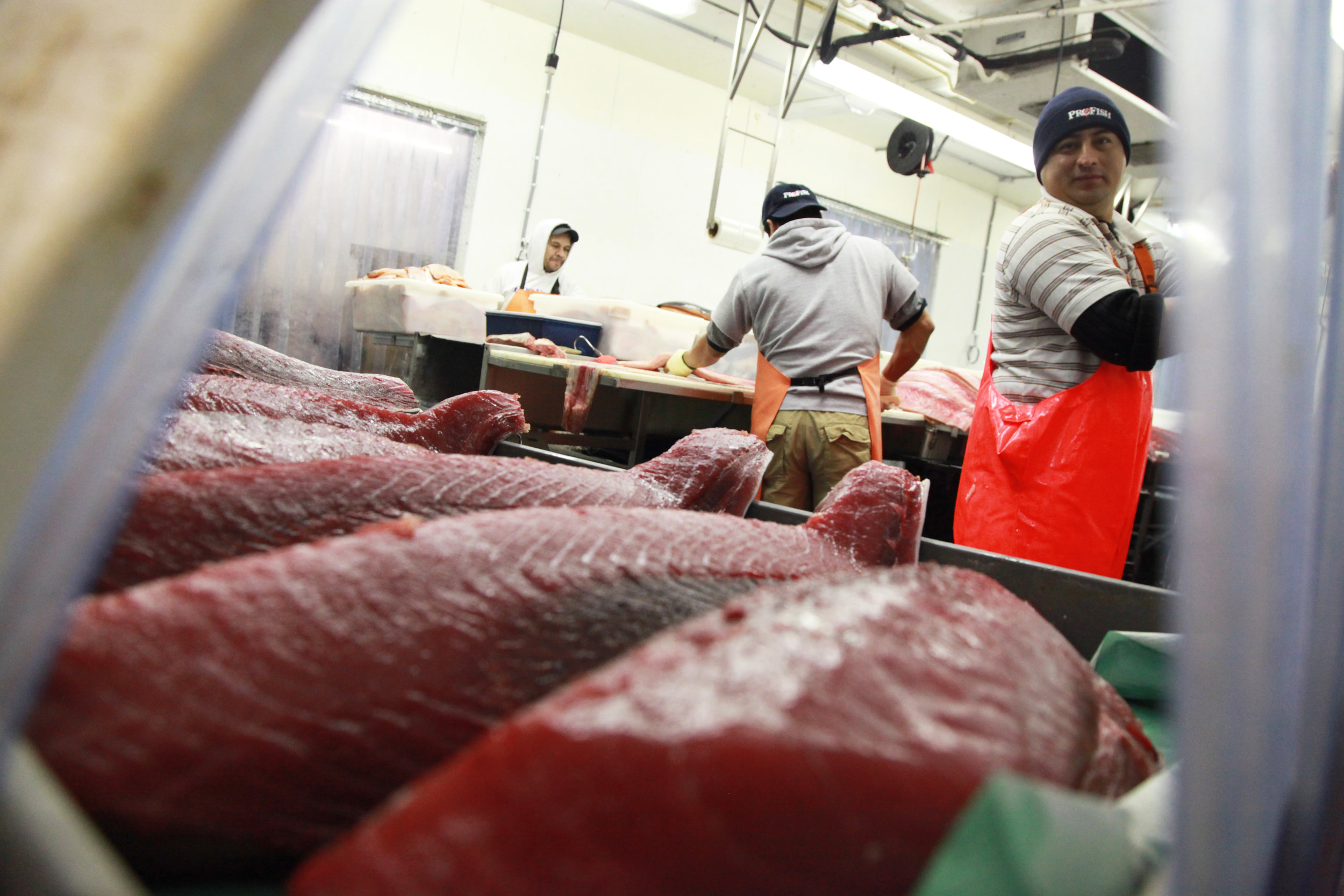 A worker takes a glimpse of the fresh tuna fillets in the fish factory owned by ProFish Ltd., in Washington, D.C., on Dec. 7, 2015. ProFish is one of the largest seafood wholesalers in Washington.