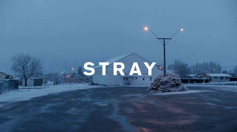 Stray (1).jpg