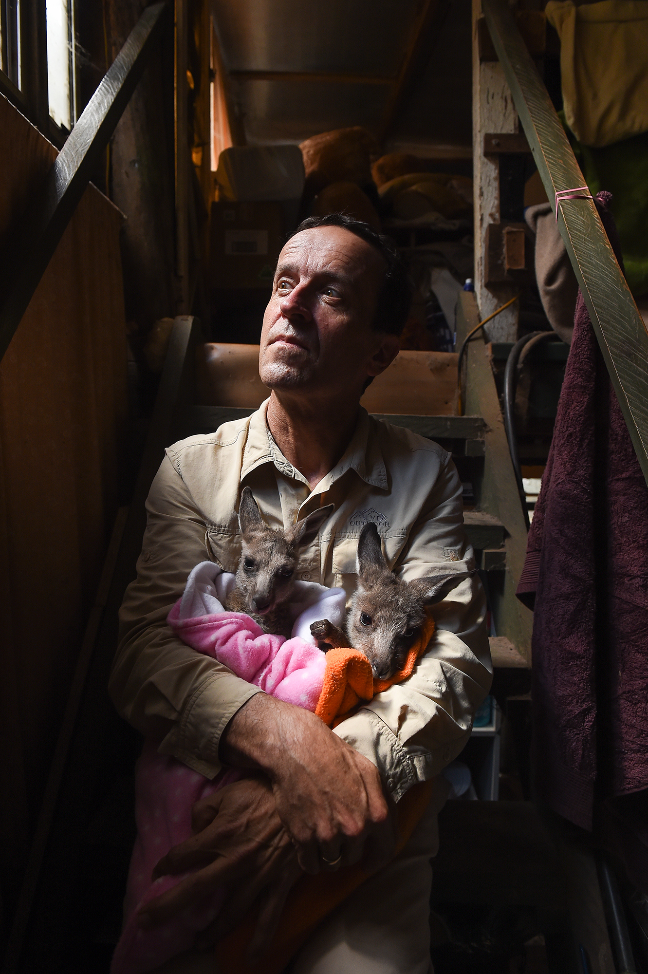 (Photo Mark Jesser) Yackandandah. Kangaloola Wildlife Shelter.A secret government report provides a damning assessment of the Kangaroo Pet Food Trial (KPFT) in Victoria, exposing fraud, illegal activity and unsustainable shooting.PICTURED: Chris Lehmann with some young kangaroos.