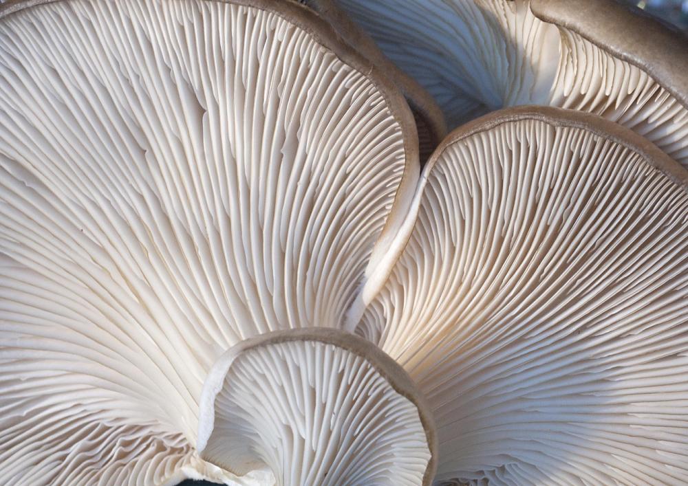 fungi-2069474_1920.jpg