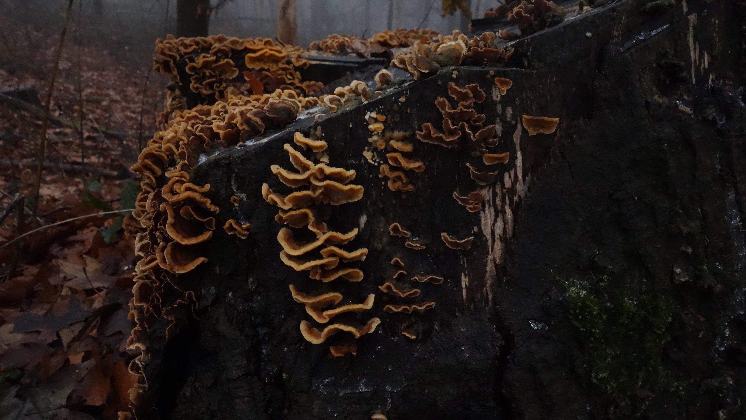 fungi2_600.jpg