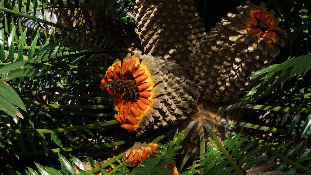 tactile_trends_botanical_garden_1024X72814.JPG