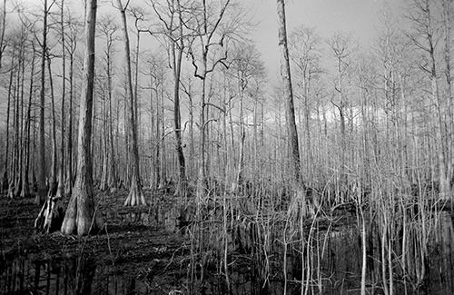 Eastern+NC+swamp.jpg