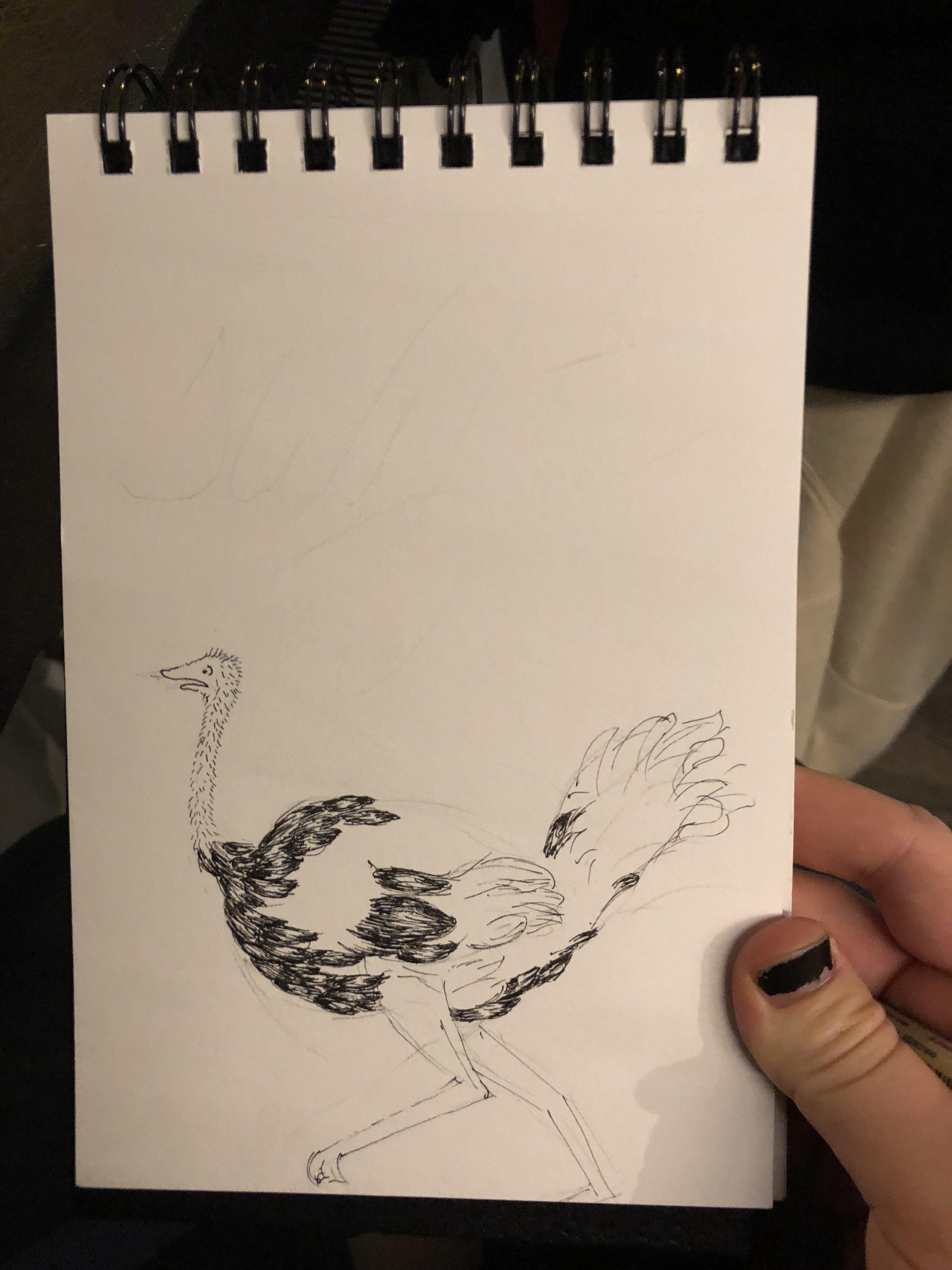 ostrich pen.JPG