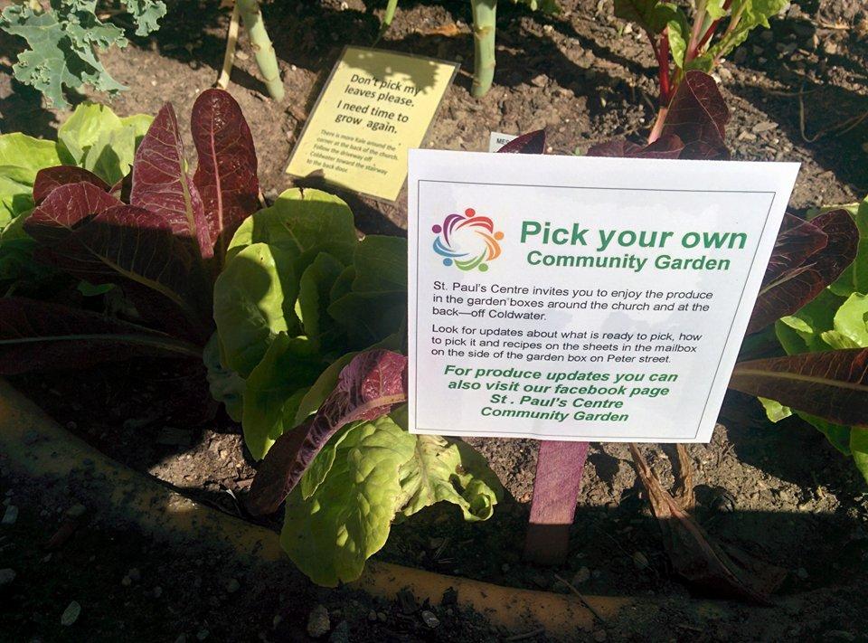 garden pick your own.jpg