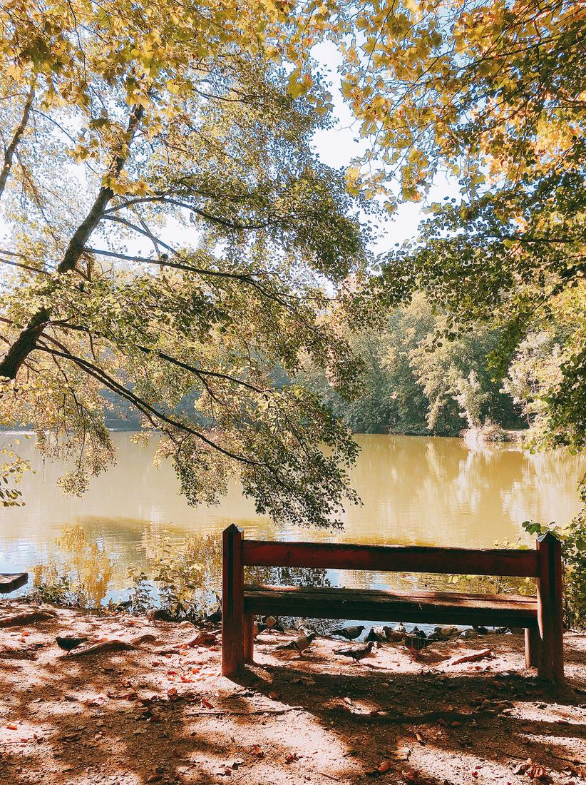 automneforetmeudon.jpg
