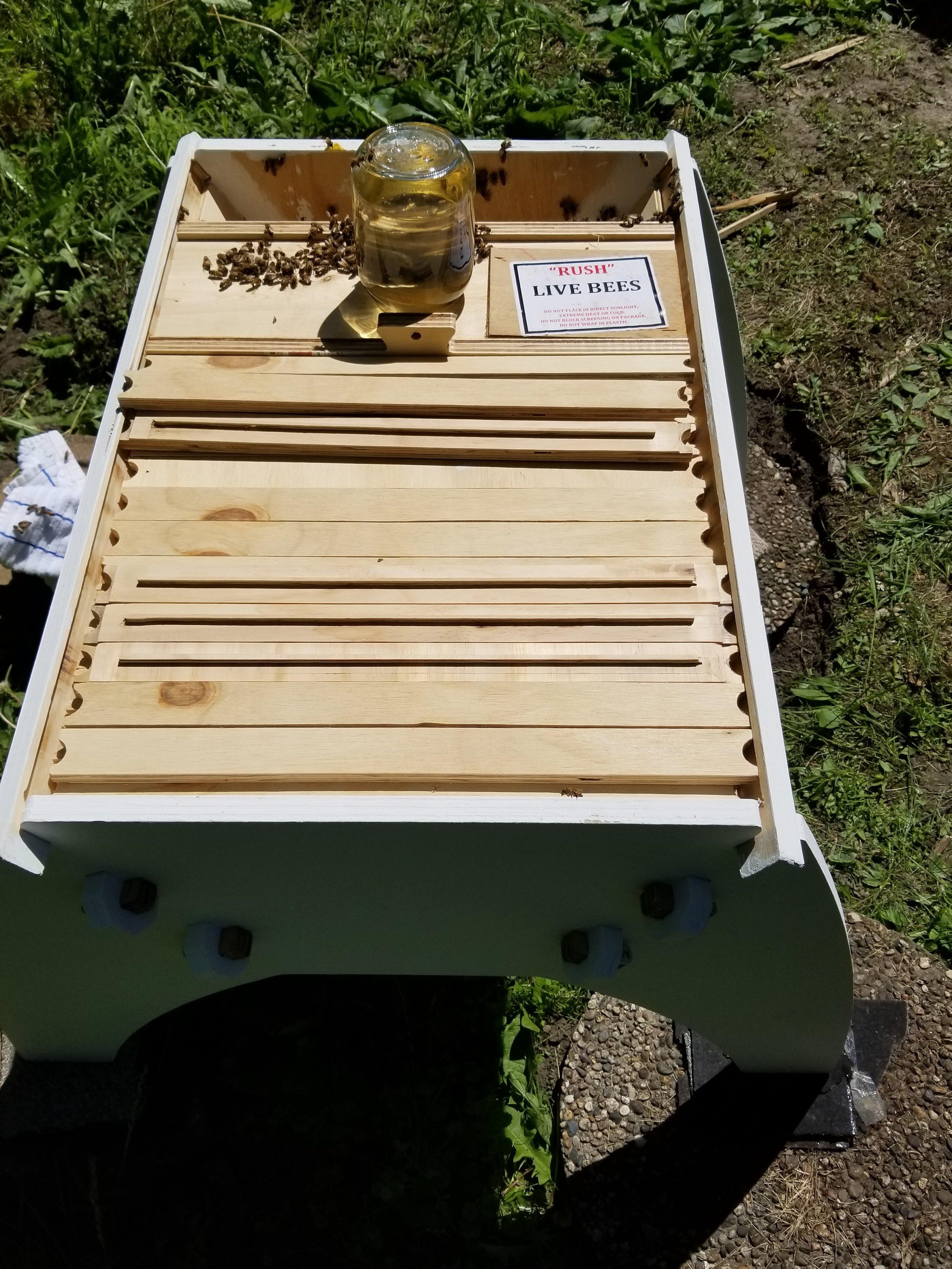 ScrumdyBum colorado top bar bee hive 3.jpg