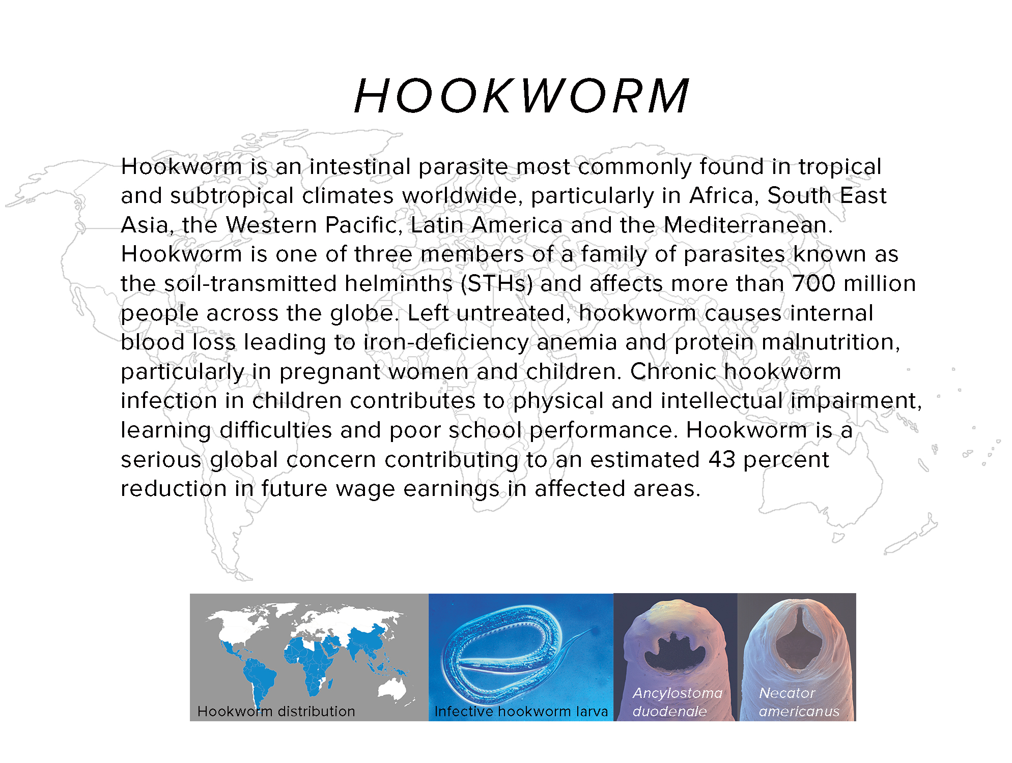 pwb_hookworm.jpg