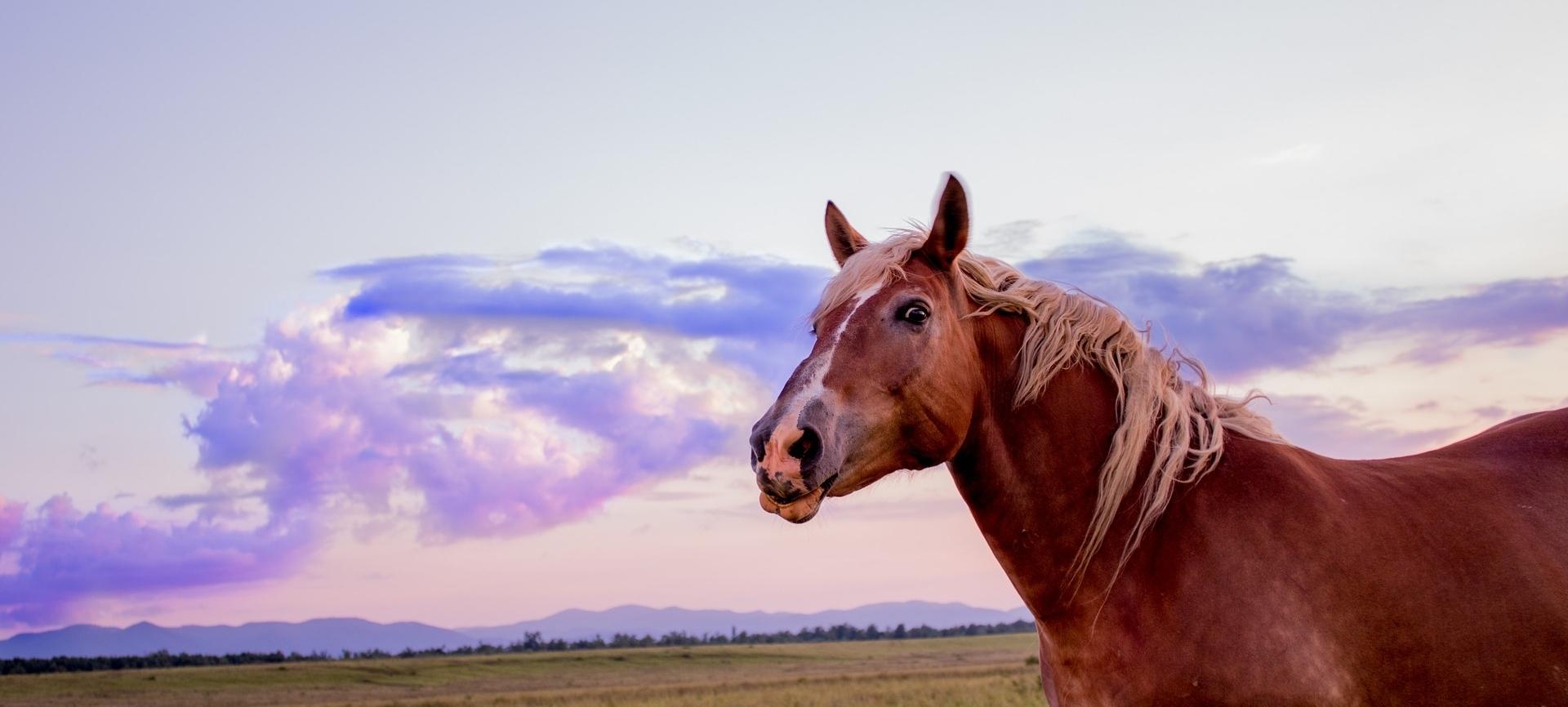 horse-3444010_1920.jpg