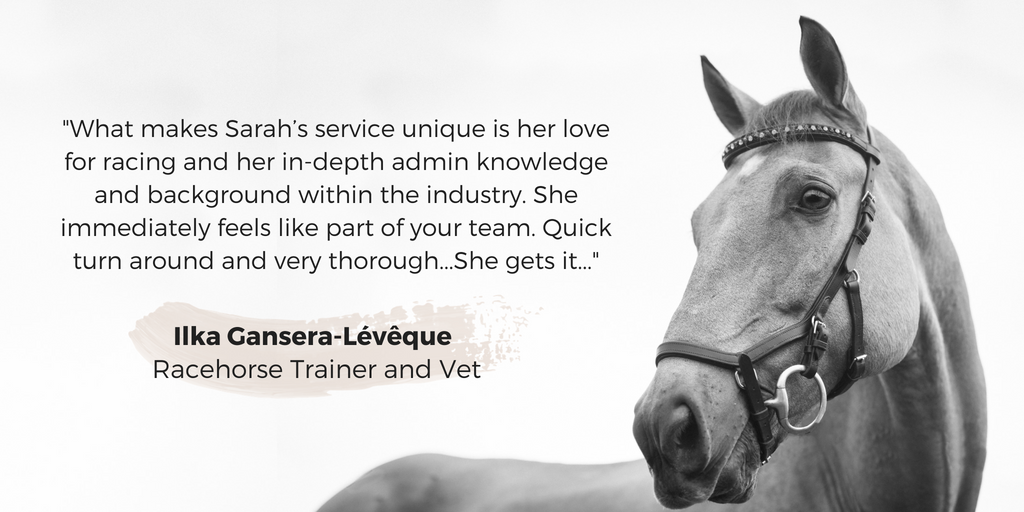 Equine Content Creation Testimonial