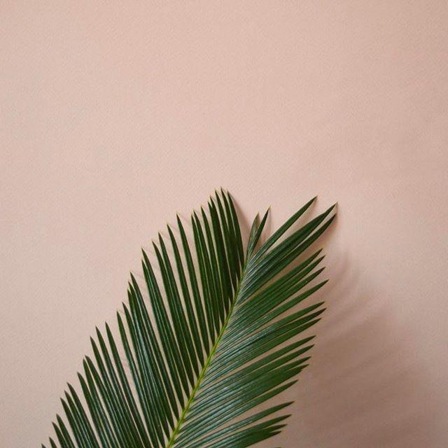 Your Biggest Fan #leaf #leafcreate . . . . . #plantsofinstagram #plants # #mothernature #naturalbeauty #natural #green #plantsonpink #naturegirl #naturalbeauty #naturelover #naturalbrands #plantbased #plantlove #branding #brandconsultancy #consciousconsultancy #consciouscommunity