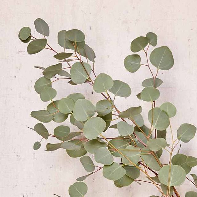 leavhearts 💚 #leaf #leafcreate . . . . . . . natural #naturalbeauty #naturegirl #holistic #organic #greenbeauty #green #beautybrands #branding #consultancy #PR #thrive #nourish #grow #synergy #ethical #partnership #wellness #business #sow #leaf #plantlove #plants