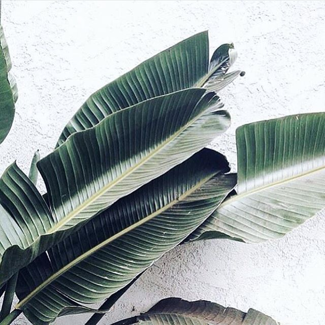 RIBBED for her pleasure (naturally) 🌿 #leafcreate #mothernature #naturalwoman . . . . #natural #naturalbeauty #naturegirl #holistic #organic #greenbeauty #green #beautybrands #branding #consultancy #PR #thrive #nourish #grow #synergy #ethical #partnership #wellness #business #sow #leaf #plantlove #plants
