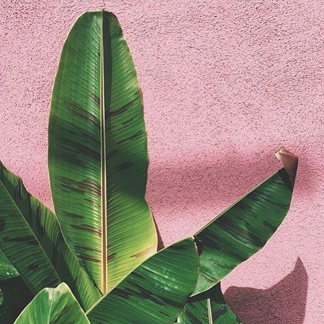 For natural brands & wellbeing expertise, LEAF is your garden 🌿