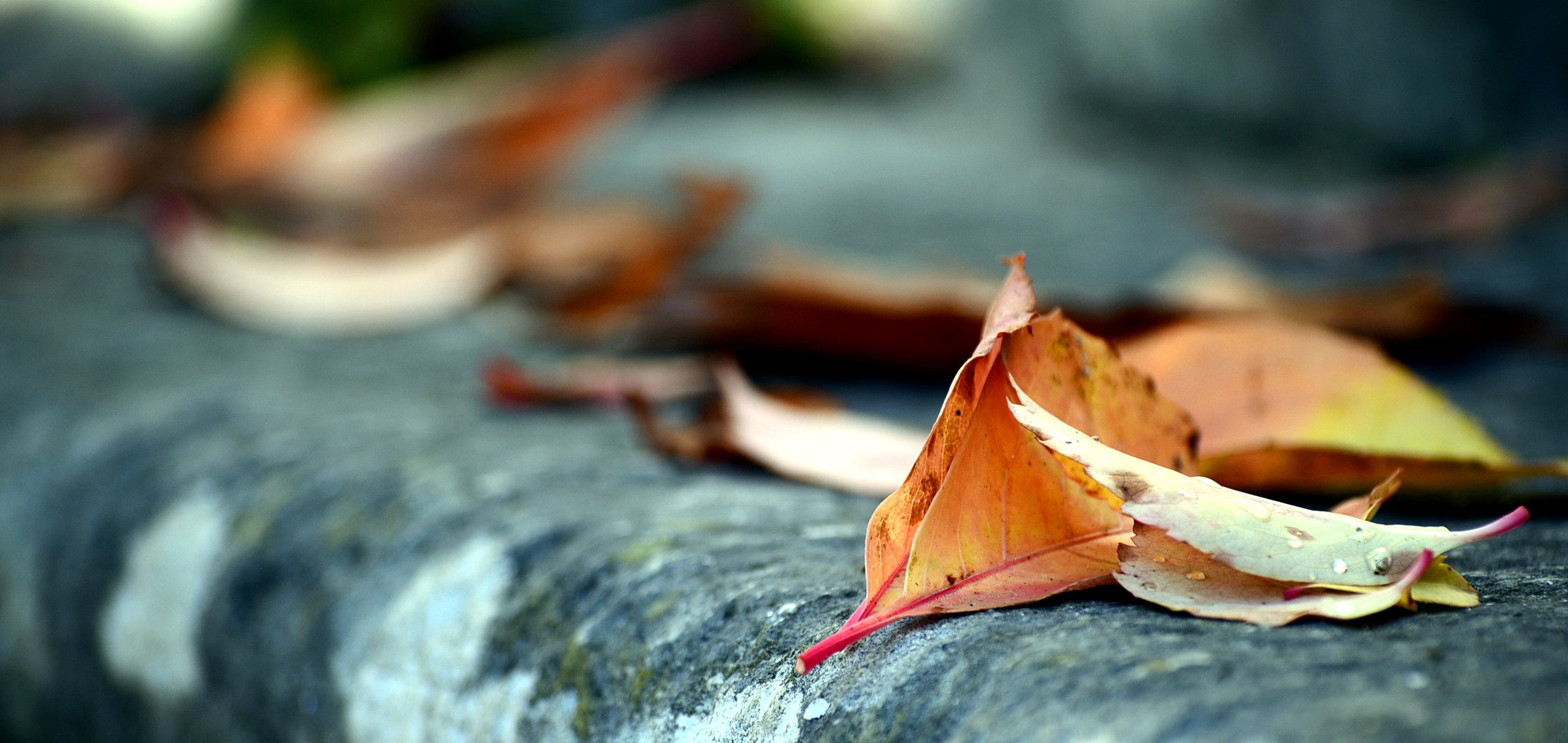 autumn by mgkm photography courtesy of Flickr.jpg