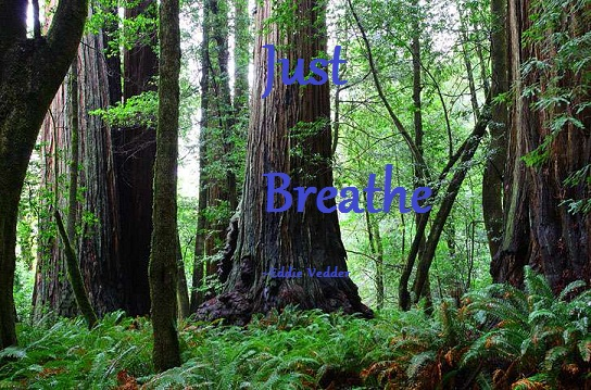 breathe-trees.jpg