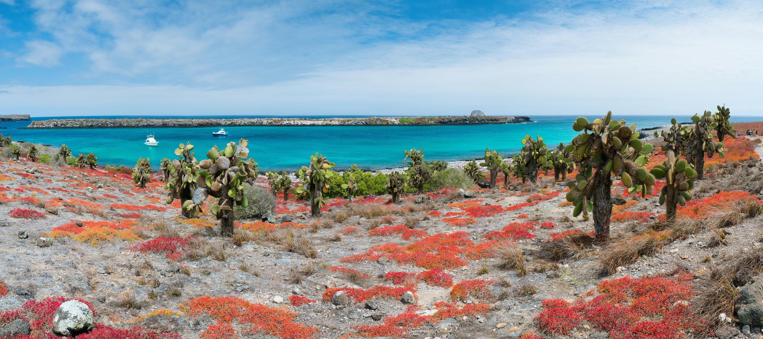 Fra øy til øy på Galapagos - øyhopping Santa Cruz, San Cristobal og Isabela.Vandre mellom sjøløver, iguaner, skilpadder og  mange forskjellige fuglearter - reis til Galapagos med Espnes