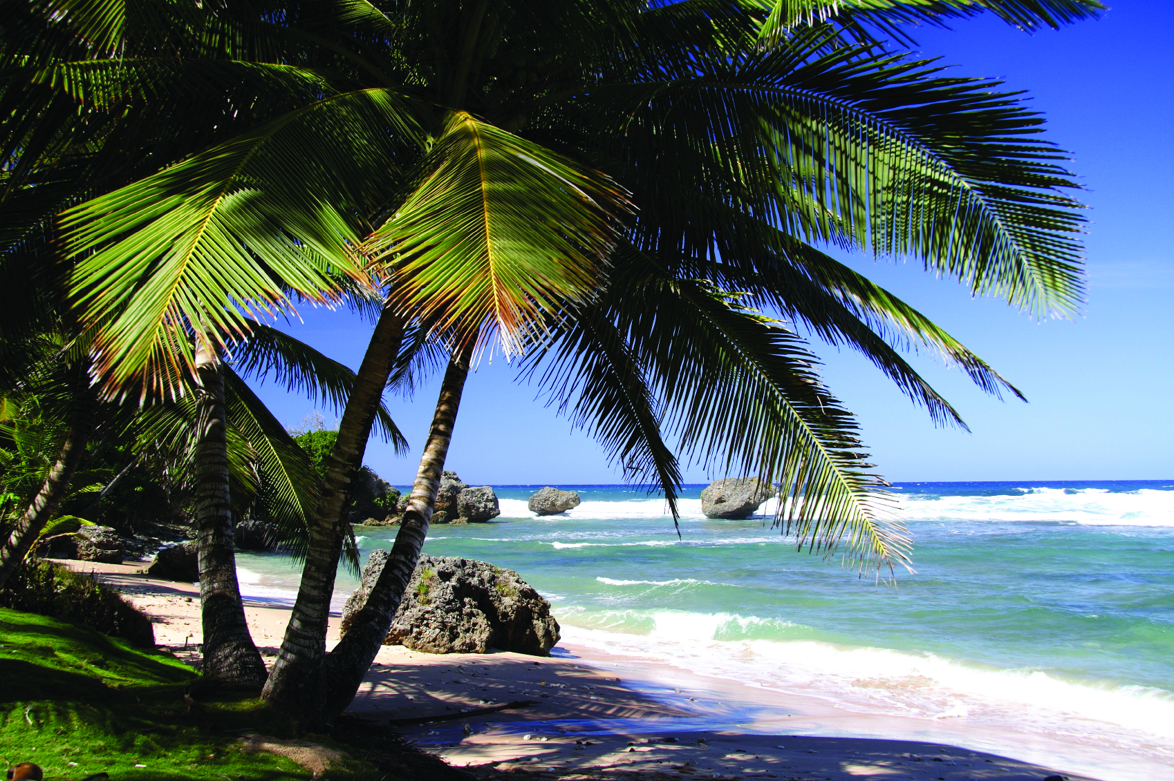 barbados_bigstock-Palms-on-the-white-beach-and-a-161072015.jpg