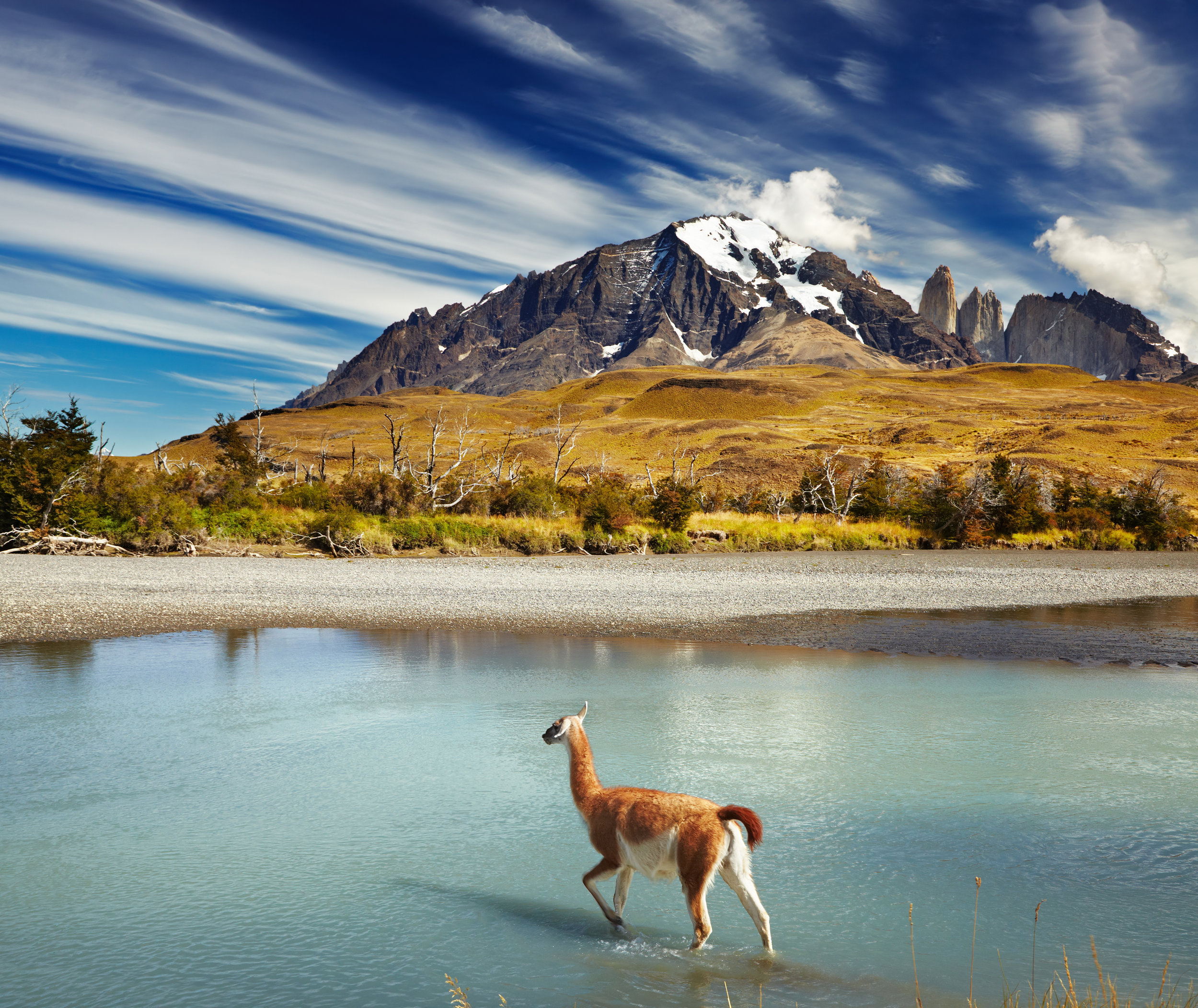bigstock-Guanaco-crossing-the-river-in--38565955-1.jpg