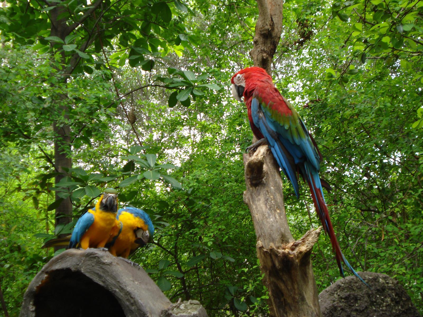 Opplevelsesferie på Galapagos er noe unikt. Bli med på øyhopping og kom tett på eksotisk natur og unikt dyreliv. Kombiner reisen med kulturelle opplevelser på fastlandet i Ecuador. Espnes har ferien.
