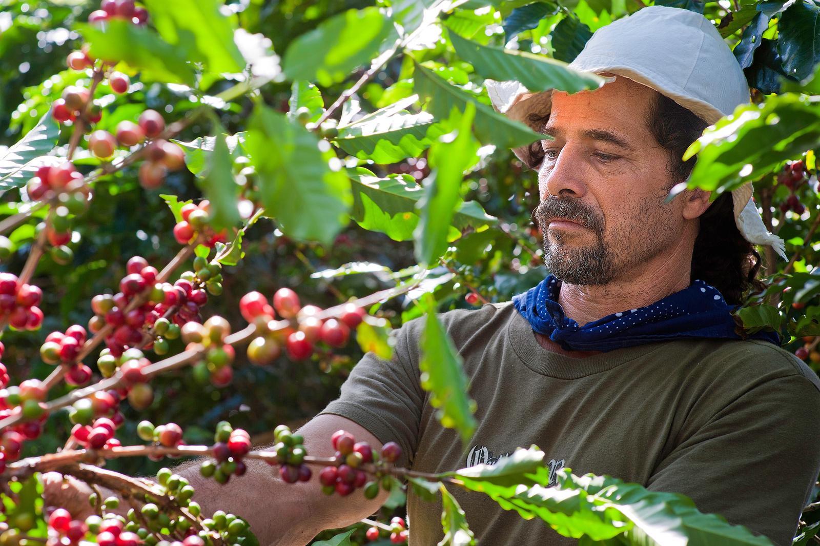 CostaRicaerkjentforsinutmerkedekaffe1.jpg