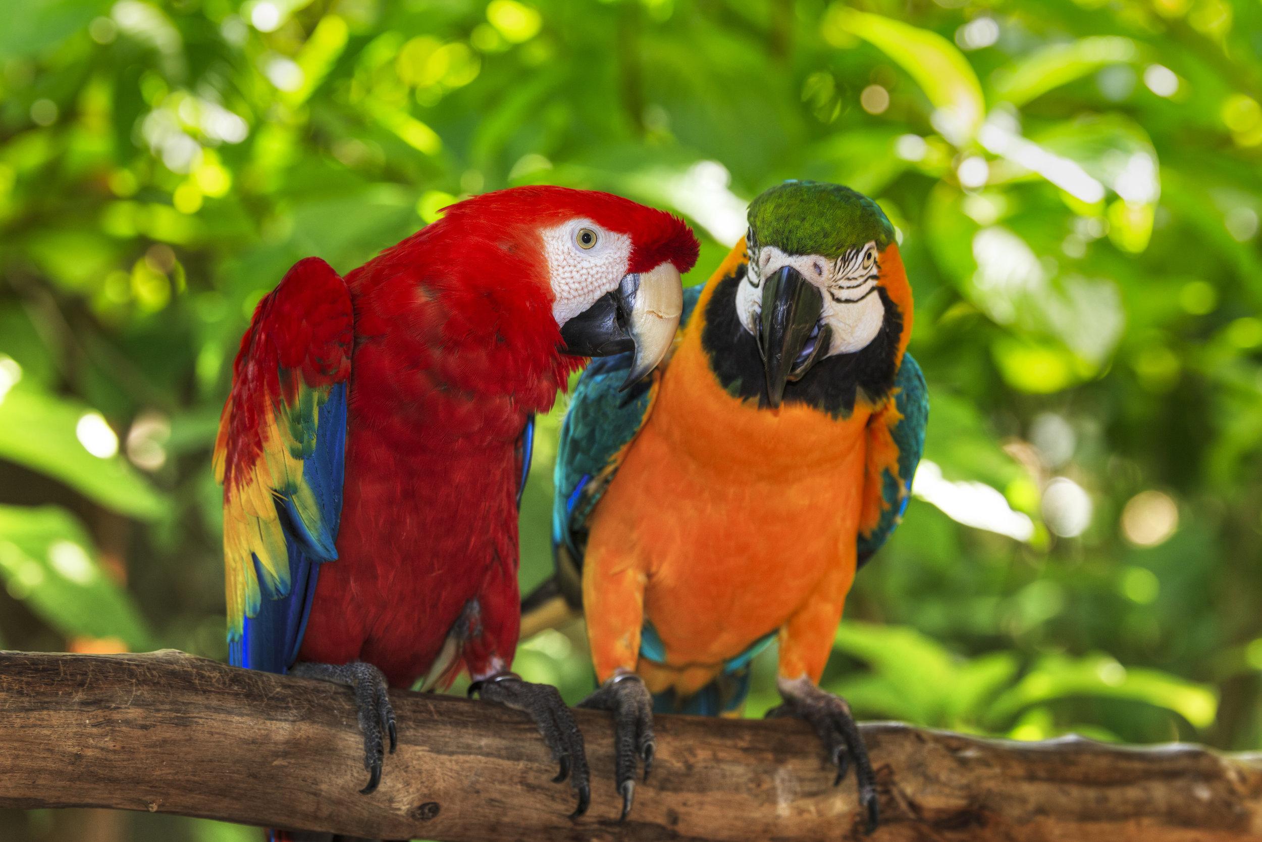 Costa Rica med vulkaner, regskog og paradisiske strender San José, Tortuguero, Dominical, Turrialba, San Gerardo de Dota. Opplev Costa Rica med Espnes.