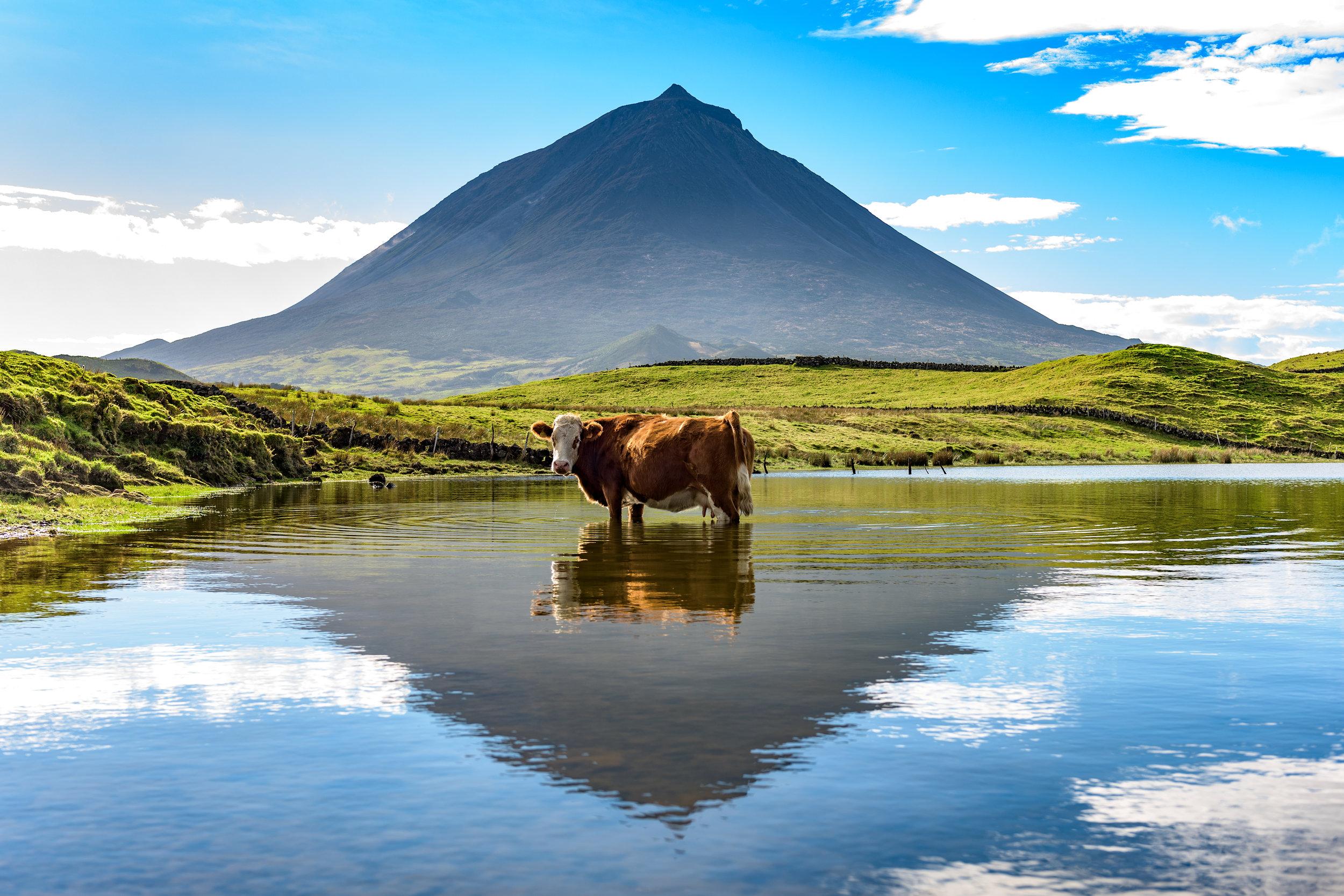 Øya Pico på Azorene