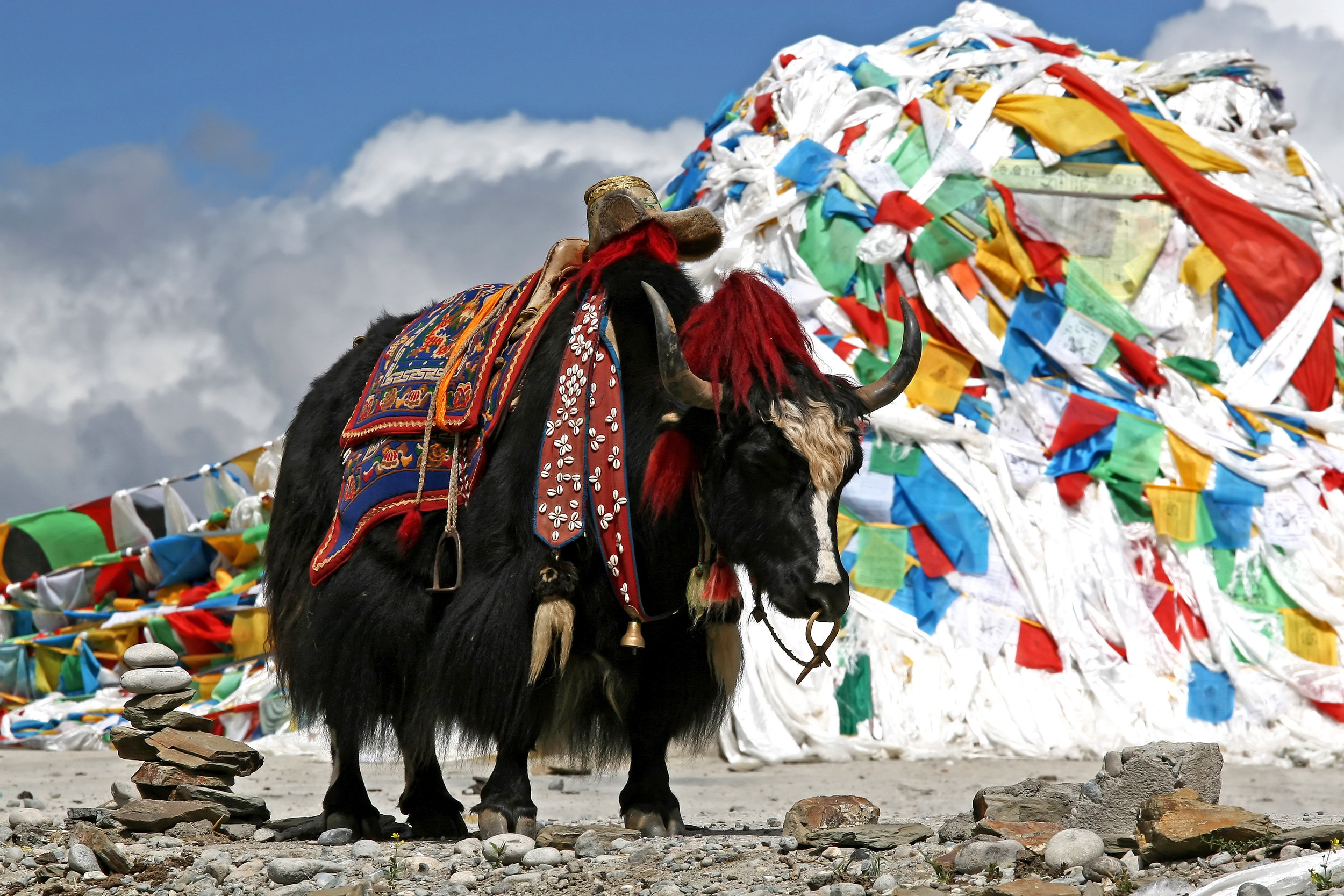 Bhutan - det flotte landet som er godt gjemt i Himalaya mellom himmlhøye fjell, frodige dalfører og tropisk jungel