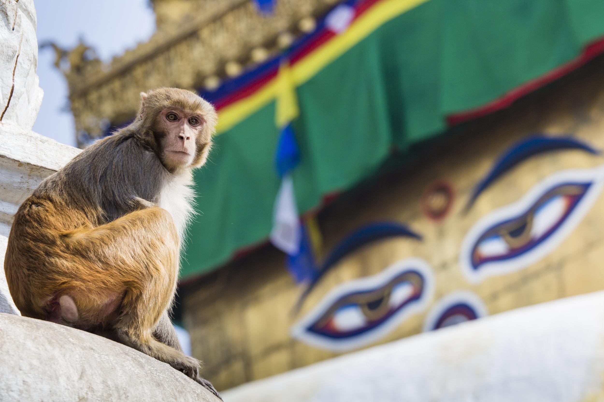 Nepal er like variert som det er magisk. Fra majestetiske fjell, til frodig jungel. Opplev spirituell enkelhet, glede og tradisjoner