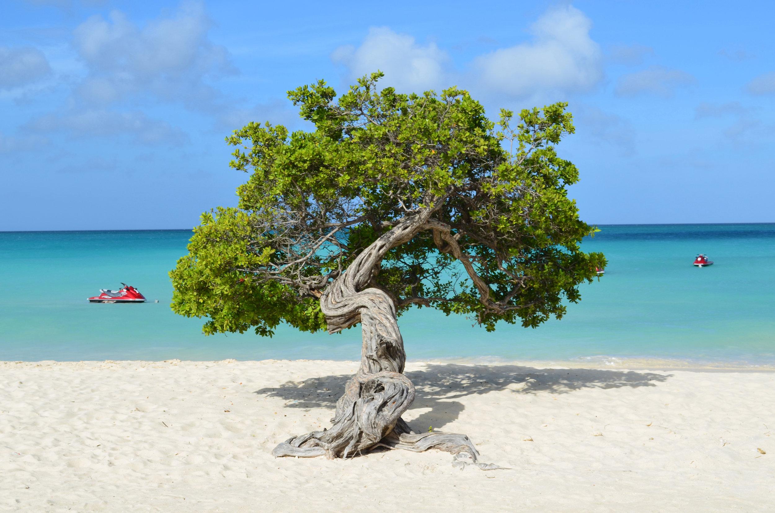 Aruba er luksuriøse hotell, deilige strender, dykking, yoga, utflukter og mye mer.