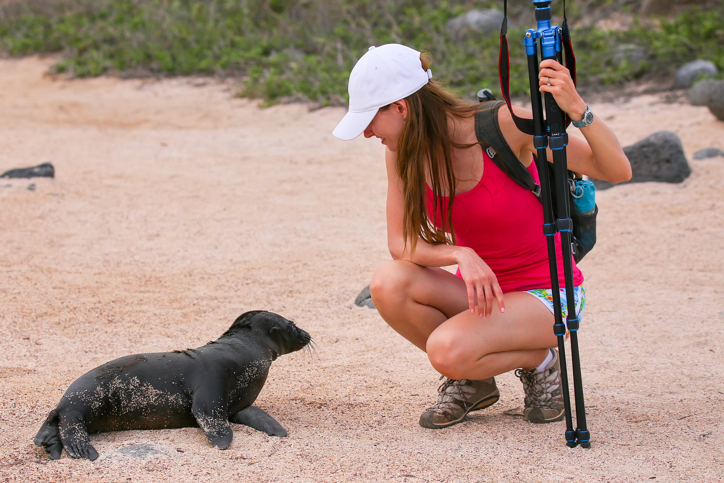 galapagos_bigstock-Baby-Galapagos-Sea-Lion-Lookin-119577878.jpg