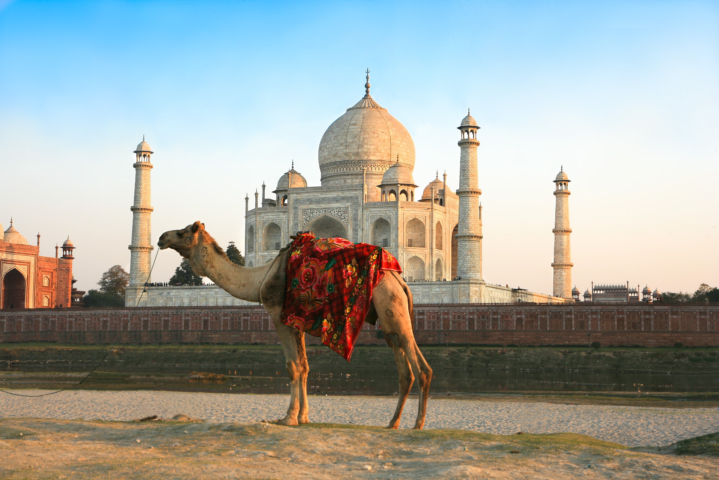 india_bigstock-Camel-in-front-of-Taj-Mahal-in-25998248.jpg