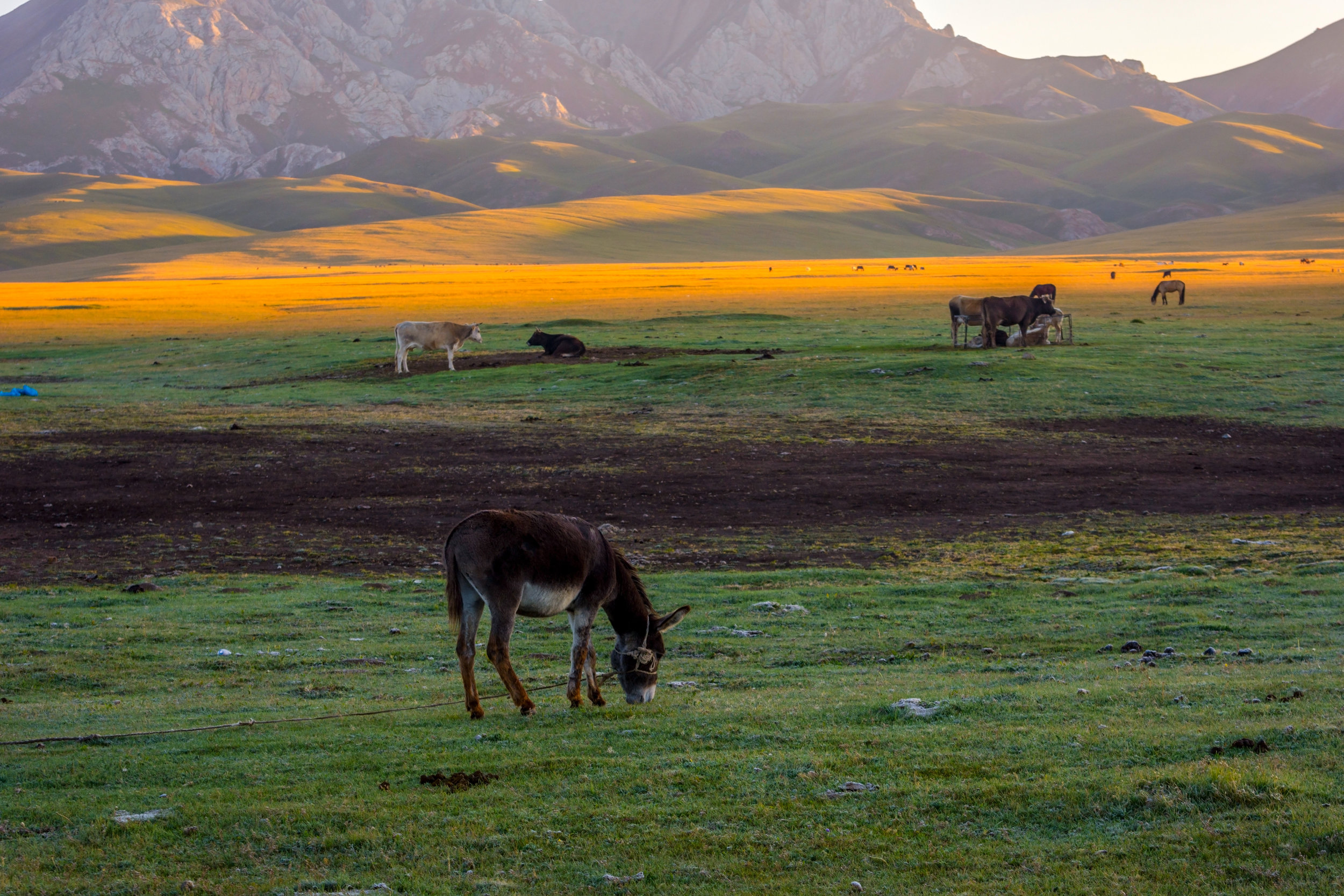 kysrgyzstan_bigstock-Mountains-And-Donkey-By-Song-K-216080899.jpg