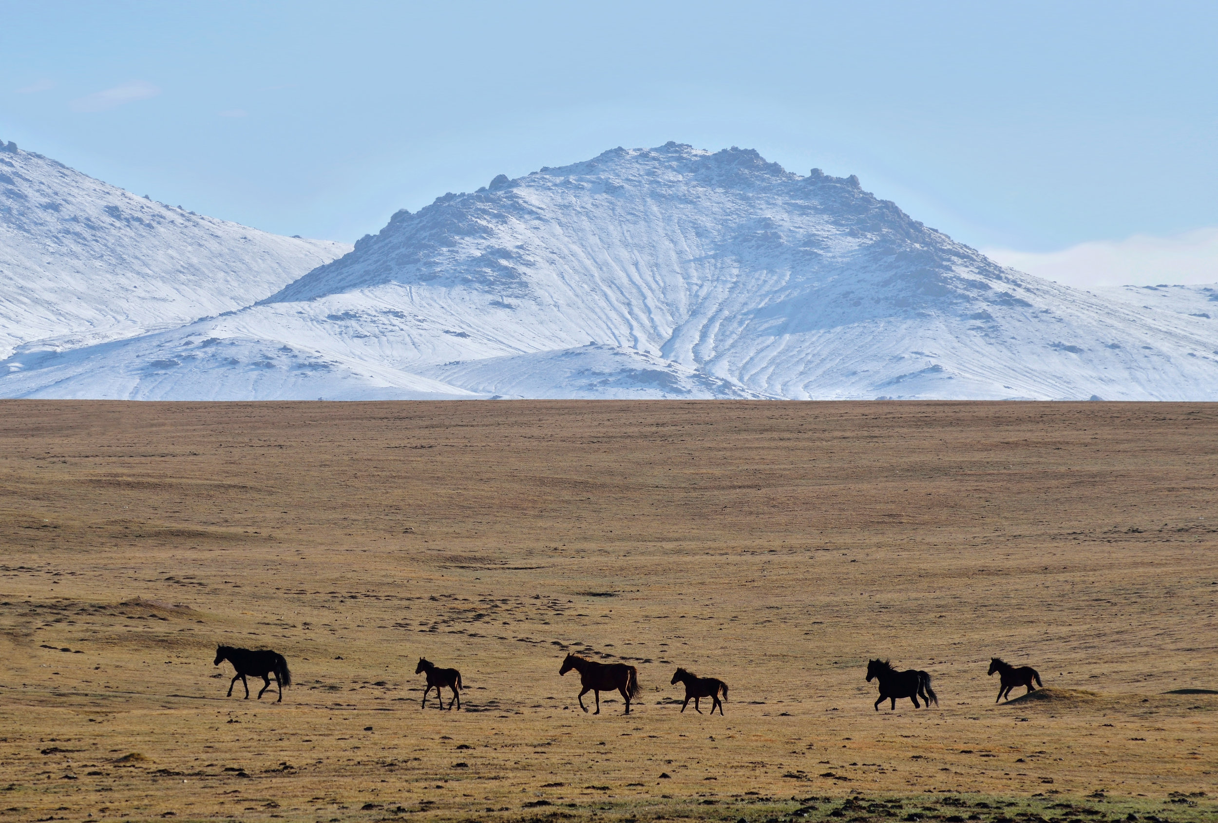 kygyzstan_son-kul-lake-bigstock-Herd-Of-Horses-Near-Son-kul-Mo-264435169.jpg
