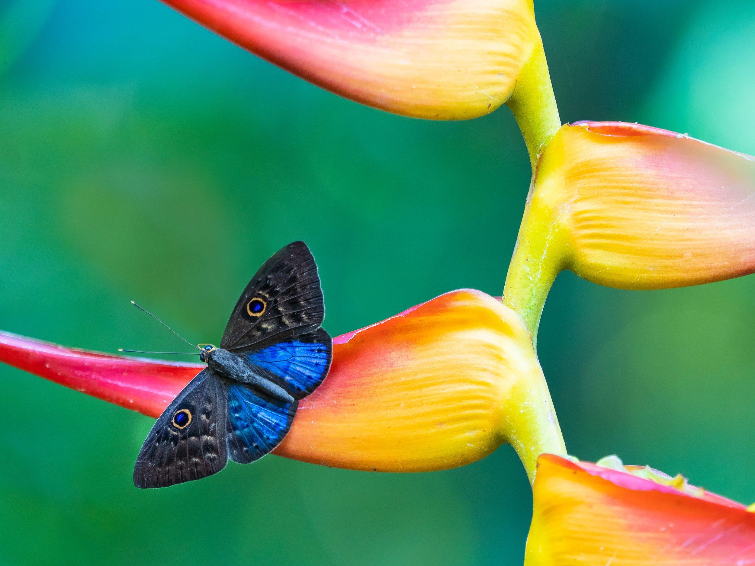 costarica_william-warby-1357841-unsplash.jpg