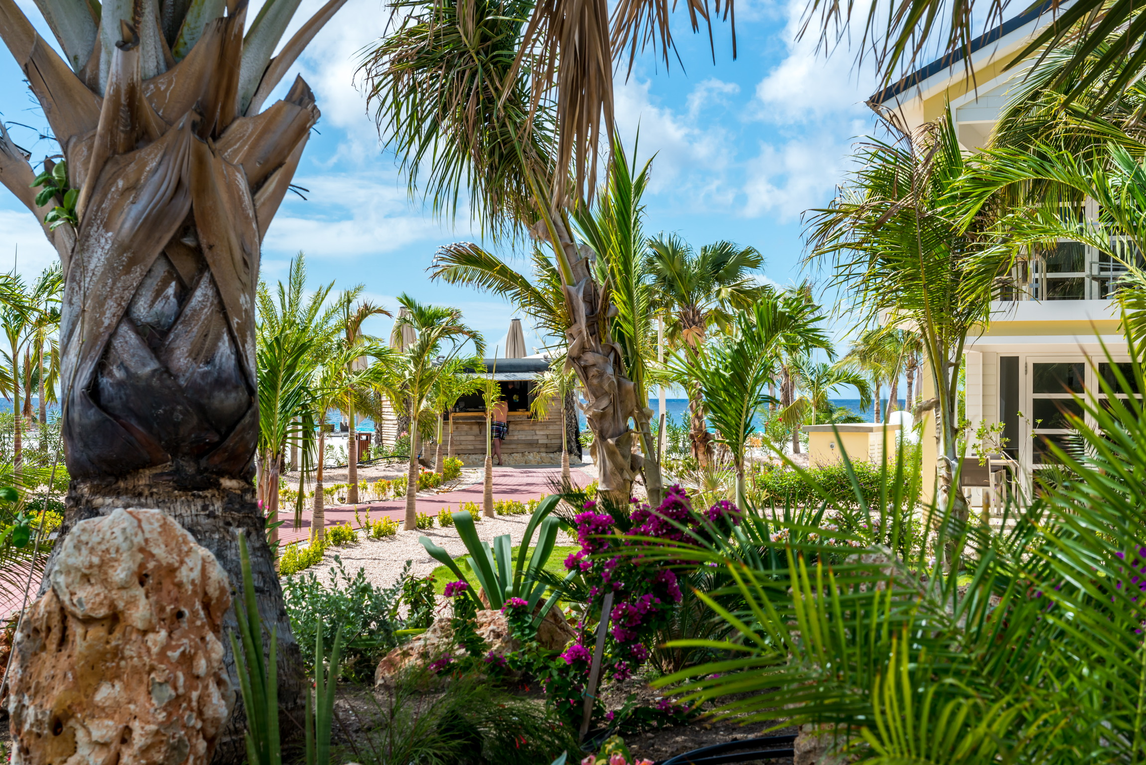 Bonaire: Delfins