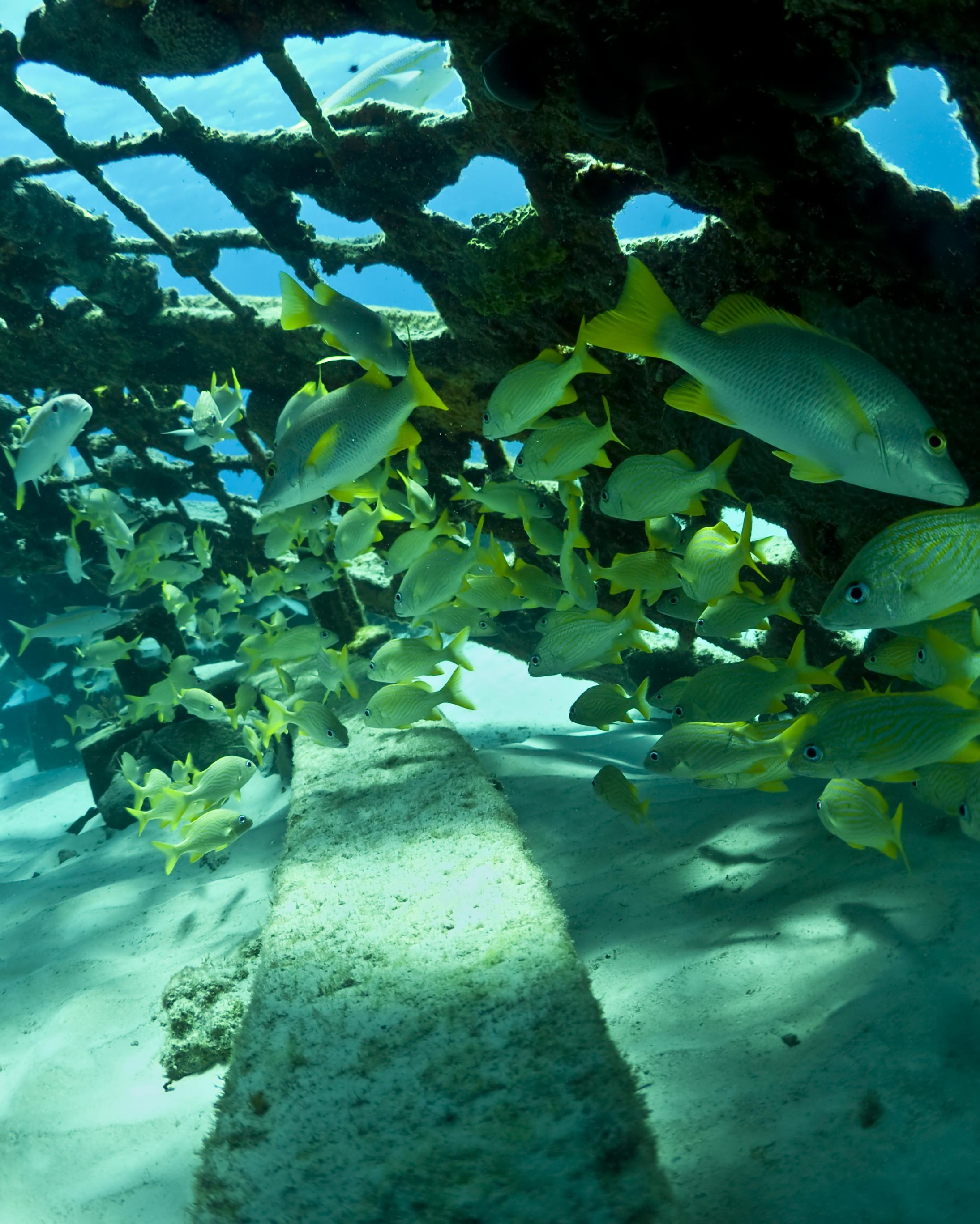 Et eldorado for dykking, snorkling, økoturisme og deilig strandliv