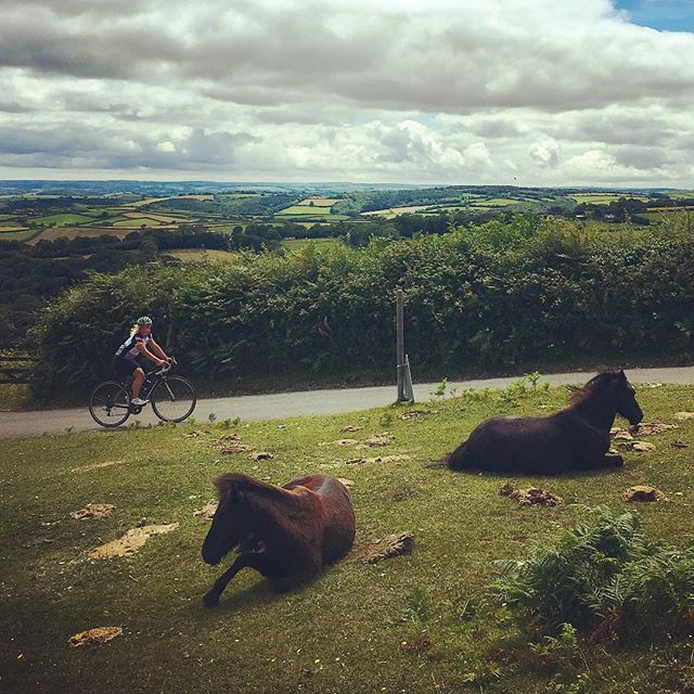 🎶Wild wild horses couldn't drag me..... up this long ass climb ! But great views at the top and a beautiful ride #bovycastle #haytor #friendlywildlife  #rollingstones #sunshine #outdoors #adventures @iamspecialized_wmn #wildhorses #dartmoor