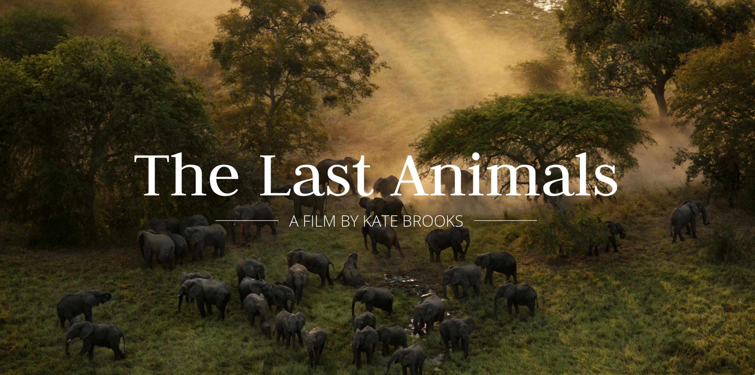 Last Animals.png