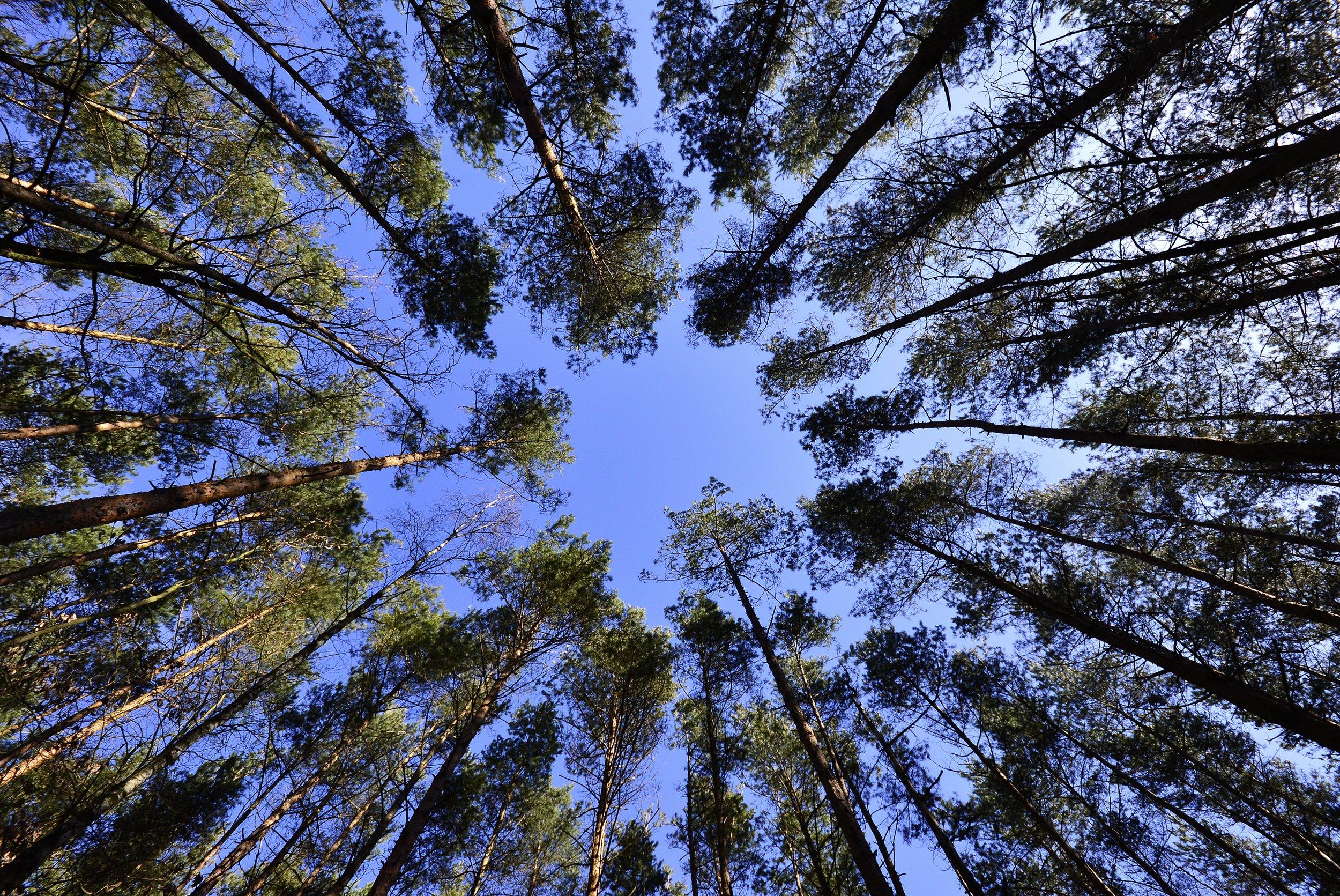 forest-231066.jpg