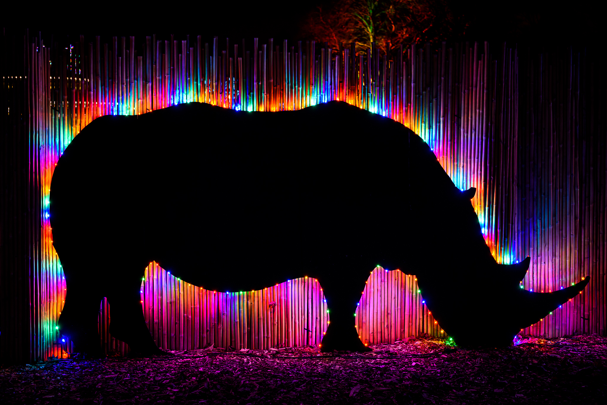 Bonus: Rainbow Rhino
