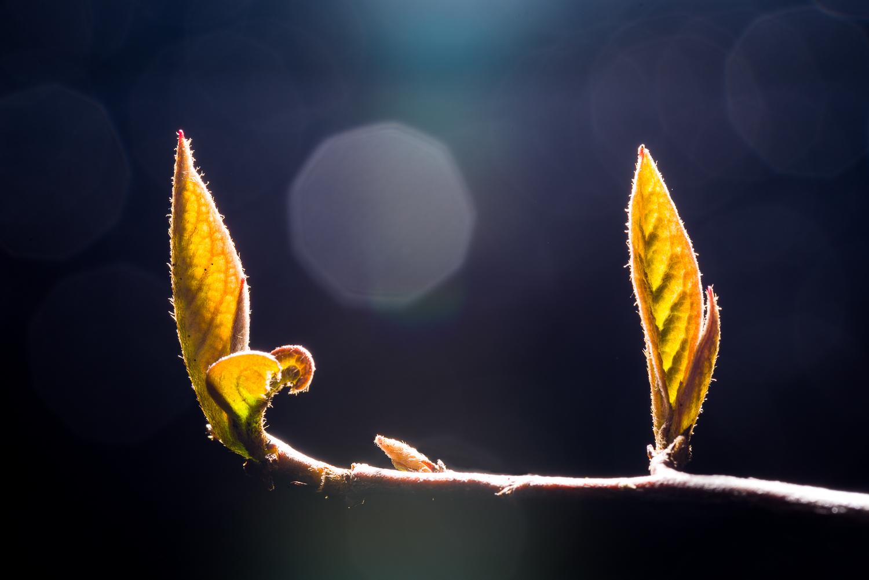Spring Leaves  Photo by Kevin Ehlers - Nikon d810 + 105mm macro, 1/100 @ f22